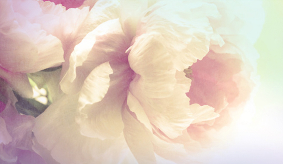 Peony: Nature's Sumptuous Beauty